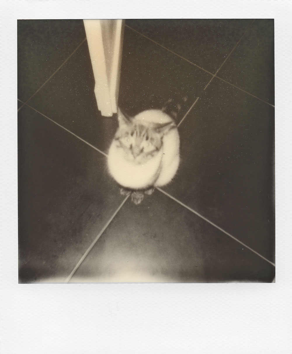 003.-Tigrou-is-confused---Polaroid-636-TC