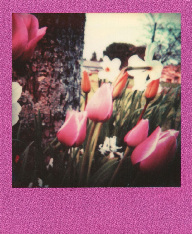 007.-Grandma's-flowers---Polaroid-SLR680