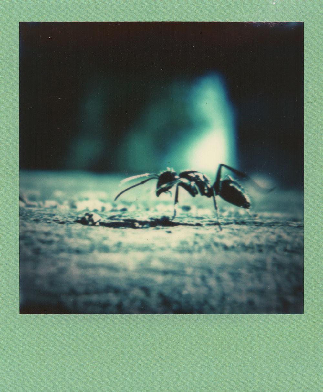 010.-GI-ANT---Polaroid-SLR680