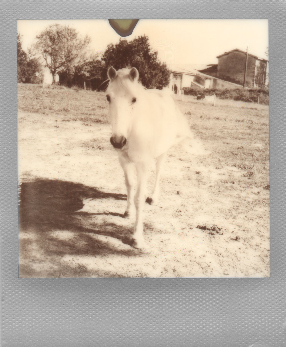 012.-The-tiny-white-horse-and-the-far-far-trees-WOO-HOO---Polaroid-SLR680