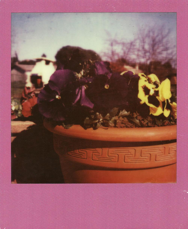021.-New-flowers-at-Grandma---Polaroid-SLR680
