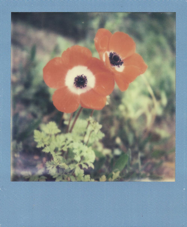 023.-Wilderness---Polaroid-SLR680